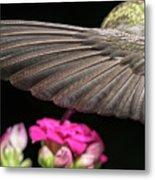 Details Of The Hummingbird Wing Metal Print