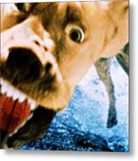Devil Dog Underwater Metal Print