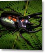Devil Horned Rhino Beetle Metal Print