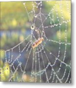 Dew Drops On A Spider Web Metal Print
