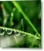 Dew Drops On Blade Of Grass Metal Print