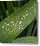 Dew Drops On Leaf Metal Print
