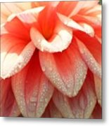 Dew -drops On The Dahlia 2  Metal Print