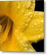 Dew Flower Metal Print