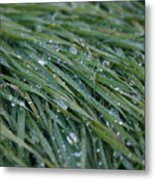 Dew Grass Two Metal Print