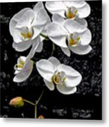 Dew-kissed Cascading Orchids Metal Print