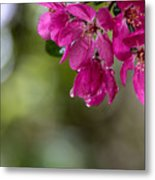 Dew On Blossoms Metal Print