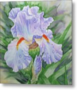 Dew On Light Blue Iris. Metal Print