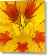 Dew On Nasturtium Metal Print