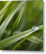 Dewy Drop On The Grass Metal Print