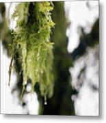 Dewy Moss Metal Print