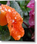 Dewy Pansy 2 - Side View Metal Print