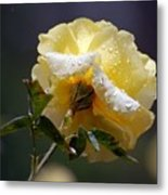 Dewy Yellow Rose 1 Metal Print