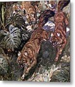 Dhole, Endangered Species Metal Print