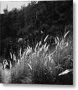 Diagonal Grasses Metal Print