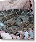 Diamondback Rattlesnake 062414a Metal Print