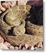 Diamondback Rattlesnake 062414f Metal Print