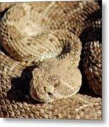 Diamondback Rattlesnake Close-up 062414a Metal Print