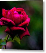 Diamonds On A Rose Metal Print