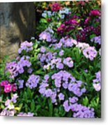 Dianthus Flower Bed Metal Print by Corey Ford