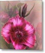 Dianthus Flower IIi Metal Print