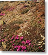 Diapensia And Lapland Rosebay Metal Print