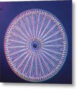 Diatom - Arachnoidiscus Ehrenberi Metal Print