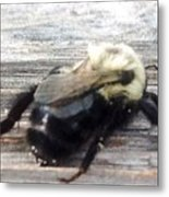 Different Take Of A Bee Metal Print