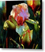 Digital Painting Vibrant Iris 6764 Dp_2 Metal Print