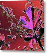 Figtree Leaves 3 Metal Print