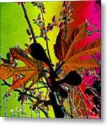 Figtree Leaves 4 Metal Print