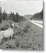 Dilemma On Highway #1, Chickaloon, Alaska Metal Print