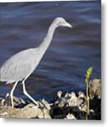 Ding Darling Wildlife Refuge Vii Metal Print