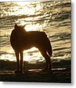 Dingo Sunset Metal Print