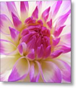 Dinner Plate Dahlia Flower Art Prints Canvas Floral Baslee Troutman Metal Print