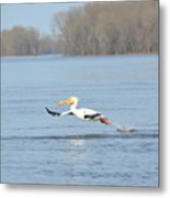 Dipping His Toes In The Water Metal Print