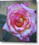 Dirty Pink Rose Metal Print