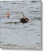 Dirty Water Dog And Feet Metal Print
