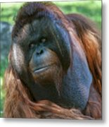 Disapproving Glance Metal Print