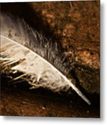 Discarded Feather Metal Print