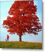Discovering Autumn Metal Print