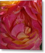 Disneyland Rose Metal Print