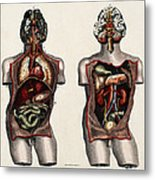 Dissected Torsos And Brains Metal Print