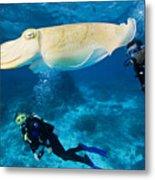 Divers Swim Near A Cuttlefish Metal Print