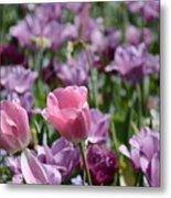 Divine Tulip Display Metal Print