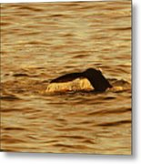 Diving Deep Metal Print