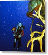 Diving The Wall At Little Cayman Metal Print
