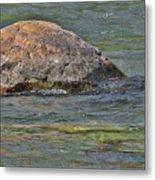 Diving Turtle Rock - Flathead River Middle Fork Mt Metal Print by Christine Till
