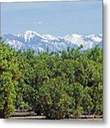 Dm6850-e Orange Grove And The Sierra Nevada Ca Metal Print