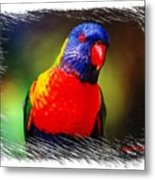 Do-00153 Colourful Lorikeet Metal Print